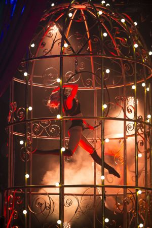 aerial hoop in bird cage