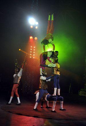 Chimp Acrobatics