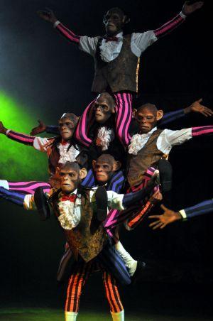 Chimp Acrobats Circus