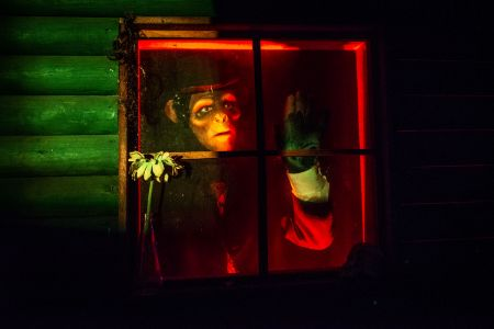 chimp halloween