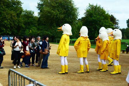 Duck Pr Campaign