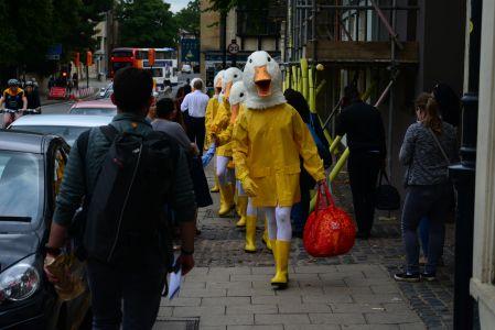 Ducks On The Street