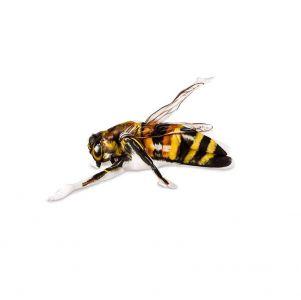 human bodypaint bee