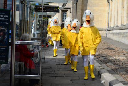 Publicity Stunt Duck