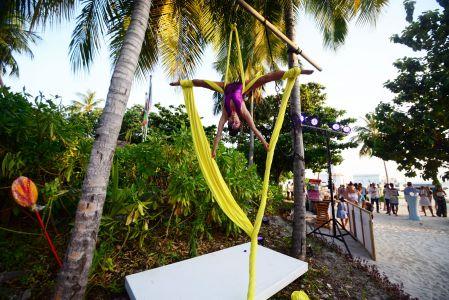 Silks Aerial Palm Trees