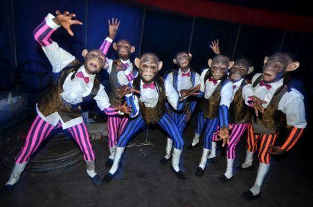 The Chimps At Zippos Circus 2010