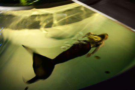 Underwater Mermaid Maldives
