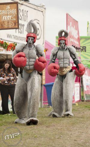 Zoo Project Boxing Kangaroos
