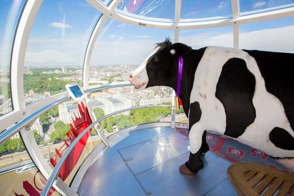 area 51 cow on london eye