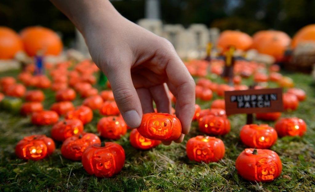 area 51 miniature pumpkin patch