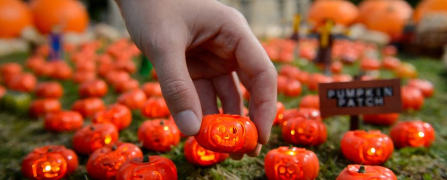 LEGOLAND: WORLD'S SMALLEST PUMPKIN PATCH